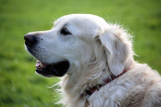 Discutons ensemble de votre chien